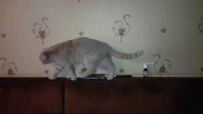 Прикол - смешной котенок, забавный кот - Лучший друг для детей