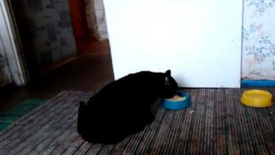 Кошка и каша