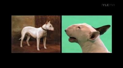 German Shepherd half dog half frog - cut from BBC Pedigree Dogs Exposed