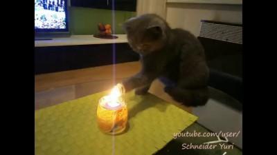Fire cat / Кот поджигает свою лапу
