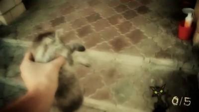 Хватай Котов!