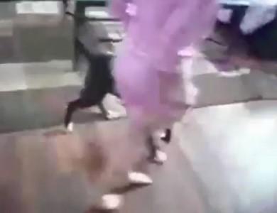 Кот-защитник