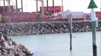 киты в порту