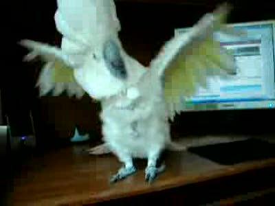 Адский попугай часть 2