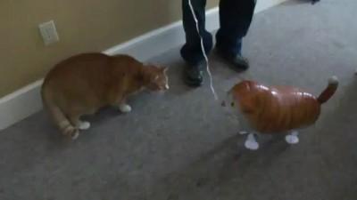 Резиновая подруга для вашего кота
