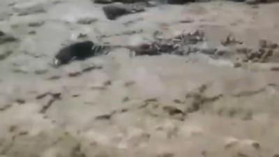 Копы спасли собакена