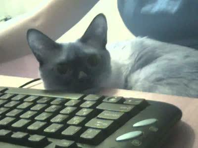 Кошка - инопланетянка