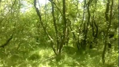 Дагестан, переход добрых и веселых террористов