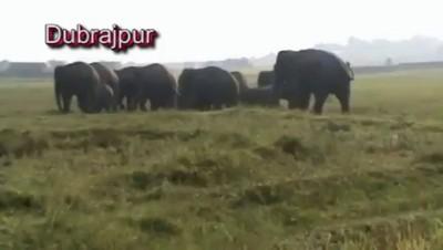 Не дразните слонов