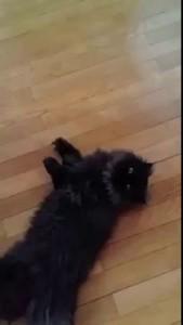 Cat die