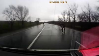 Обстріл автомобіля «Явір-2000» під Слов'янськом