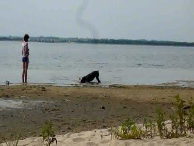 Собака и пенёк