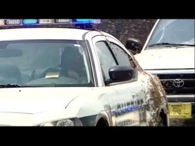 Пчелы атаковали полицейскую машину