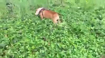 Радосный собакен