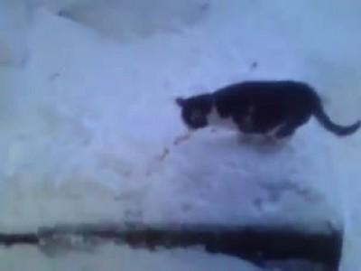 Палундра у кошек