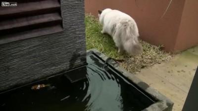Кошка спасает рыбку