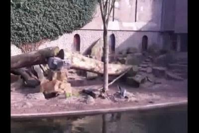 Птичку жалко...