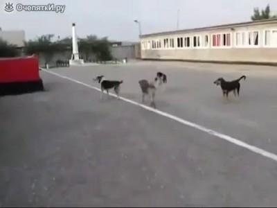 Собаки поют гимн России