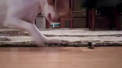Собака-играка