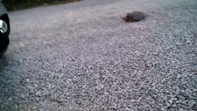 черепах жуткий