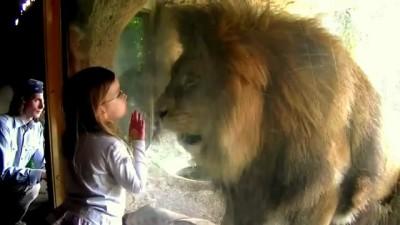 Мелкая девчёнка троллит льва