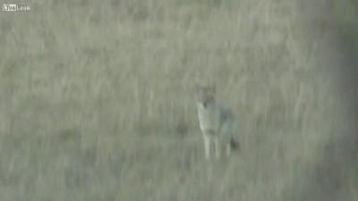 Охотники спасли оленя