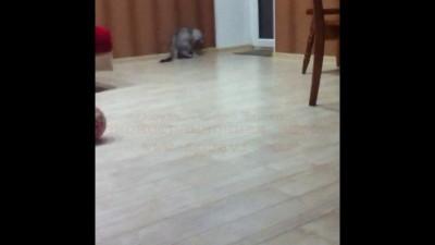 Собака?