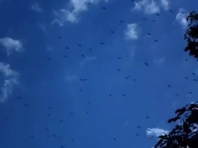 Via Pontica - white storks - Burgas - Виа Понтика - бели щъркели - Бургас