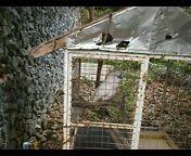 погладь попугая