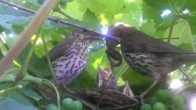 Птица кормит детенышей