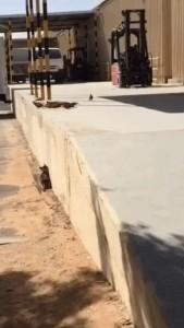 Удачная охота кота