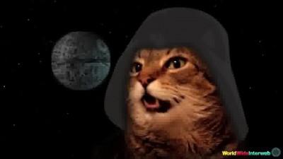 catstarwars