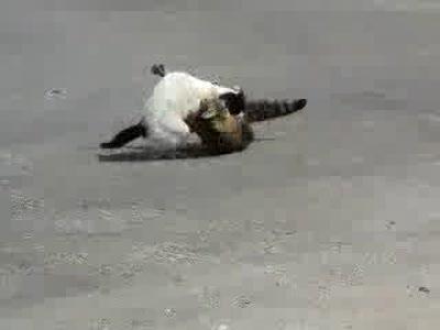 Коварное нападение кота
