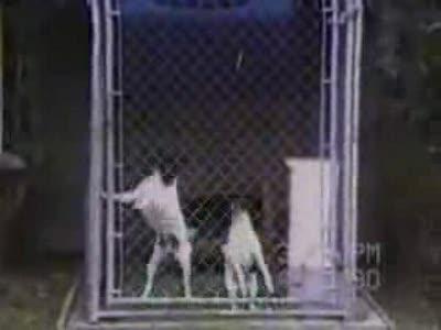 Синхронные собачки
