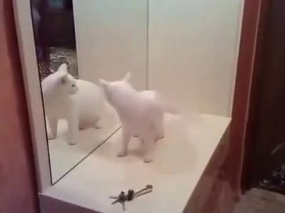 Кот на кота или сам с сабой афегеное видео