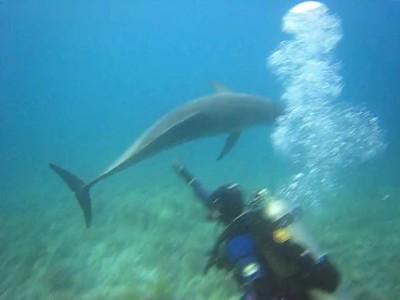 Под водой с дельфинами (внезпно)