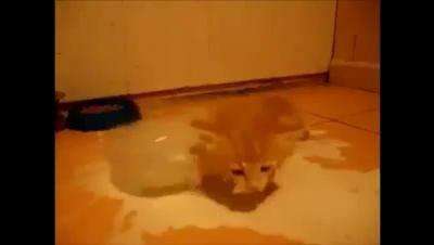 Котенок сходит с ума от молока.