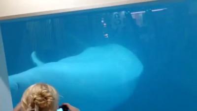 Дельфины в Макдональдсе (Лазаревское)