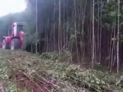 КИРОВЕЦ валит лес (Kirovets fells forest)