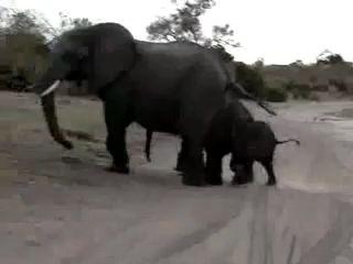 Слоненок чихнул