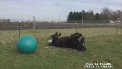 Коню дали мячик