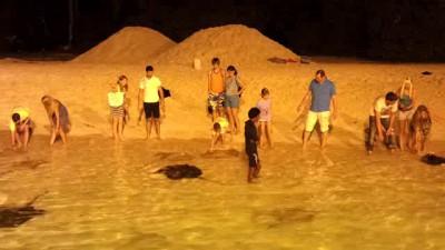 Кормление скатов на Мальдивах