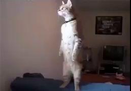 Котик и уличная драка