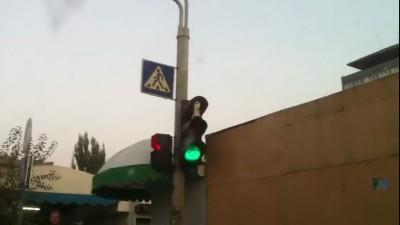 Кот на светофоре