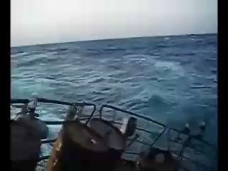 Морские волки
