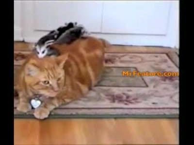у кота железные нервы