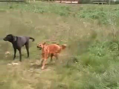 Собака-Танцевака (remix)