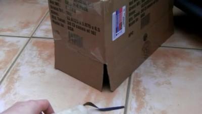 Как выманить кота из коробки