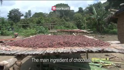 First taste of chocolate in Ivory Coast