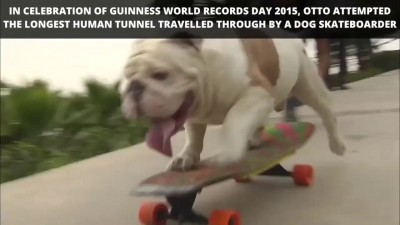 Бульдог попал в книгу рекордов